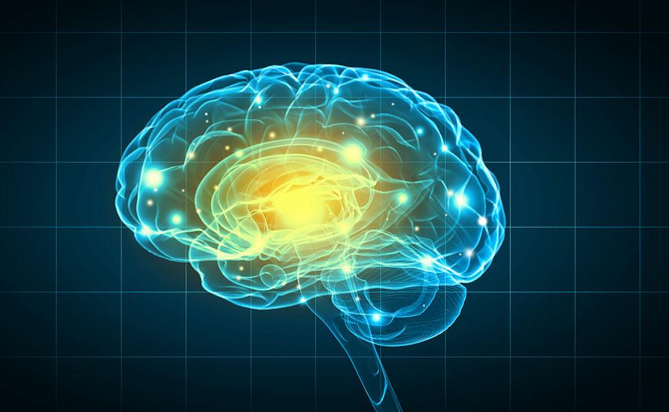 connexions neuronales sur une image en 3D