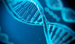 L'ADN, lorsque le digital rend tout possible